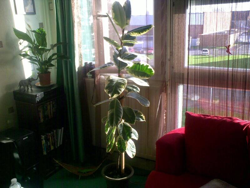 mes plantes. Black Bedroom Furniture Sets. Home Design Ideas