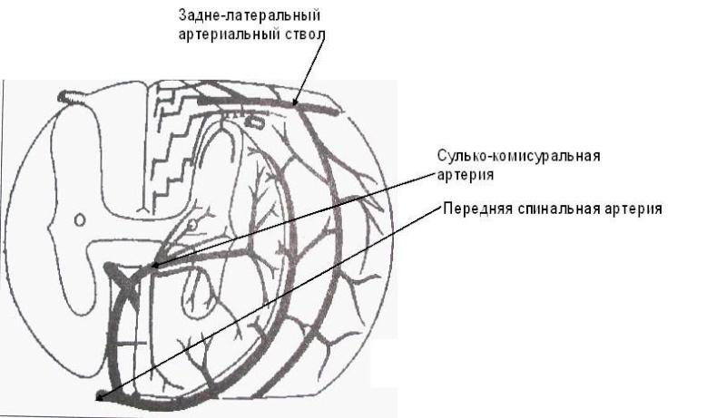 Эпидидимис фото