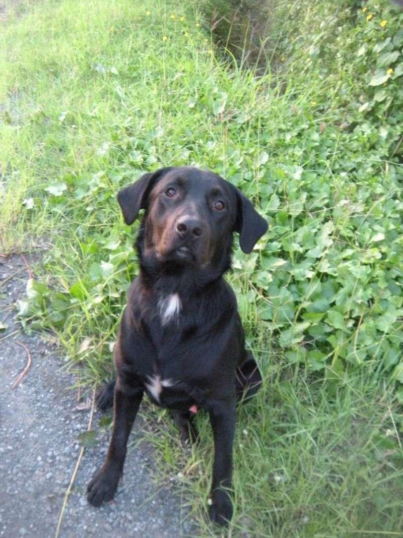Trouve crois labrador noir avec t che blanche au poitrail le 07 01 2012 - Tache de resine sur vetement ...