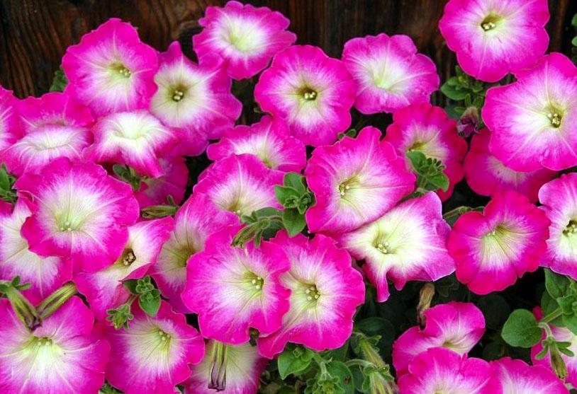 фото цветы разные: