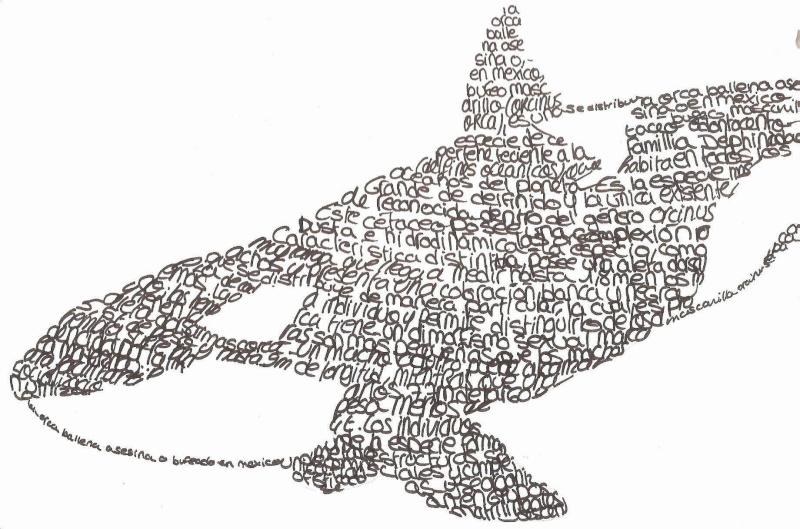 Mes dessins besoin de conseils - Dessin d orque ...