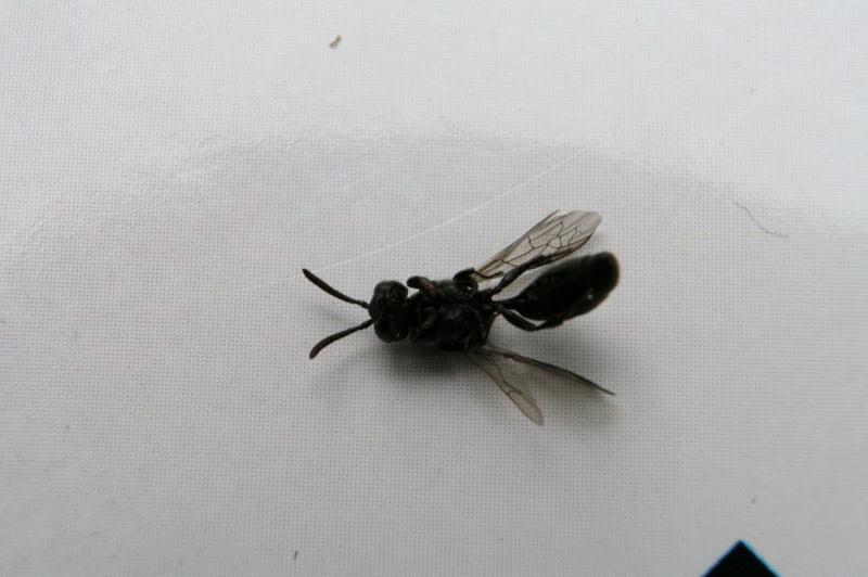insecte volant bois maison ventana blog. Black Bedroom Furniture Sets. Home Design Ideas