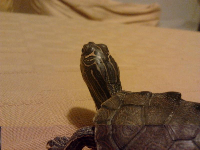 Le tartarughe d 39 acqua dolce non sono lente for Tartarughe di acqua dolce