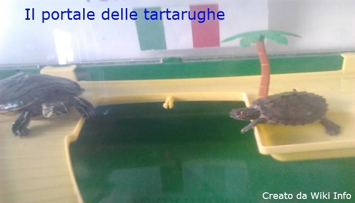 Il portale delle tartarughe wiki info for Vaschette tartarughe