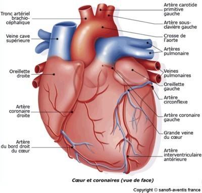 anatom11.jpg
