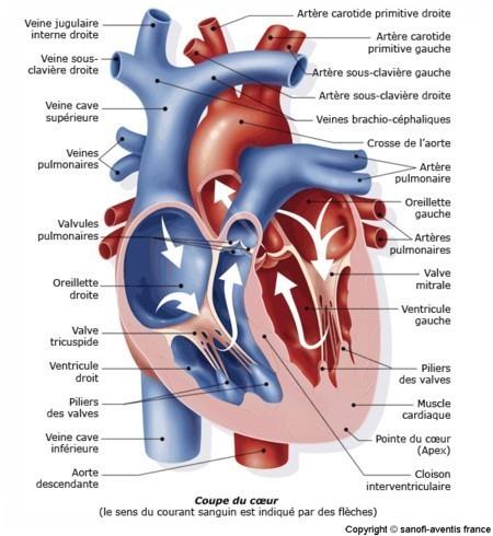 anatom13.jpg