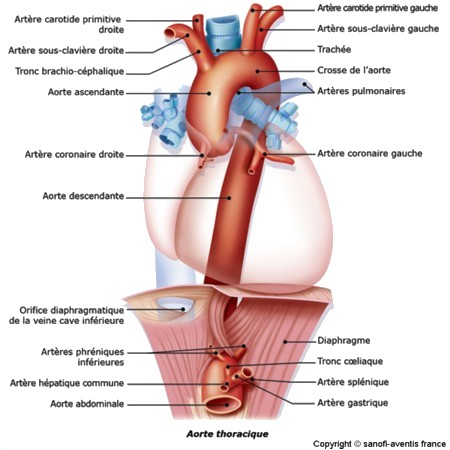 anatom15.jpg