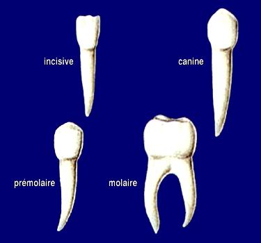 dents10.jpg