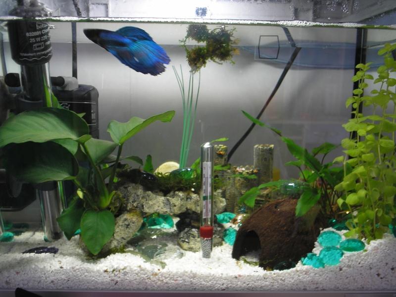 Mon betta dans son 20l for Filtre aquarium 20l