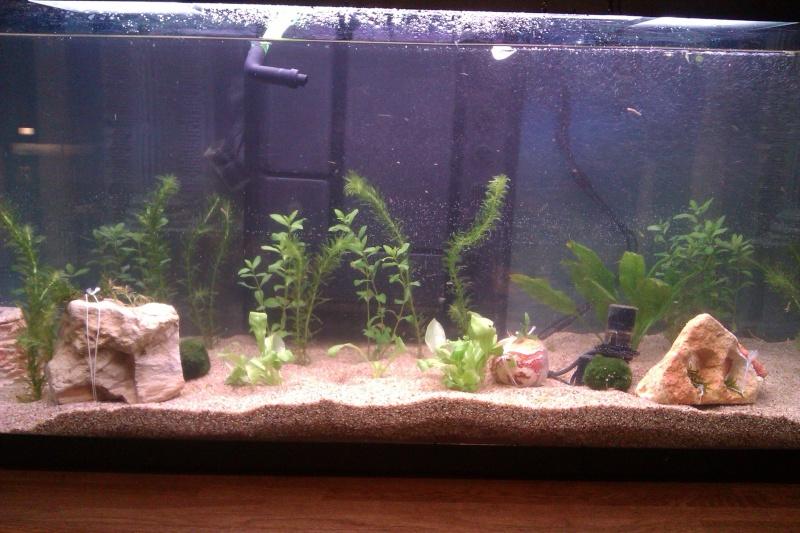 aquarium mise en route mise en route aquarium 200 litres poissons rouges. Black Bedroom Furniture Sets. Home Design Ideas
