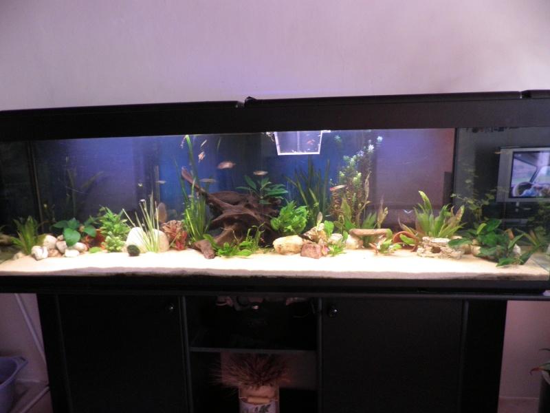 Conseil d 39 eclairage pour mon 600l djedje30 for Aquarium 600l