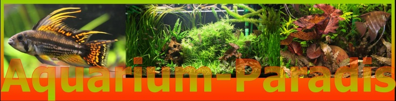 Aquarium-Paradis.forumgratuit.org