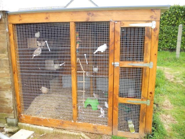 Cohabitation lapin caille tourterelles autres problemes - Voliere exterieur fait maison ...