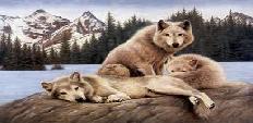 Libros de Lobos
