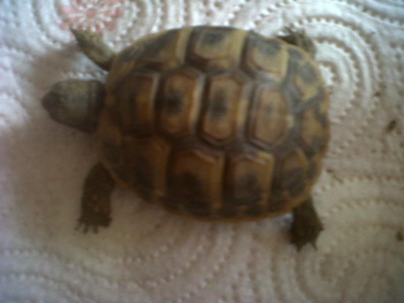 Je vien d 39 avoir une tortue for Avoir une tortue a la maison