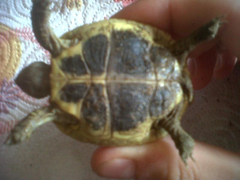 Je vien d 39 avoir une tortue page 2 for Avoir une tortue a la maison