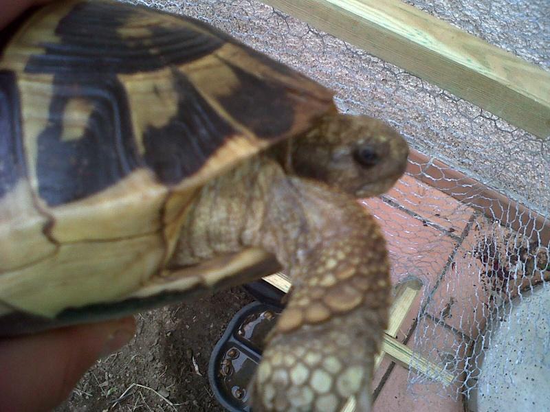 Je vien d 39 avoir une tortue 2 for Avoir une tortue a la maison