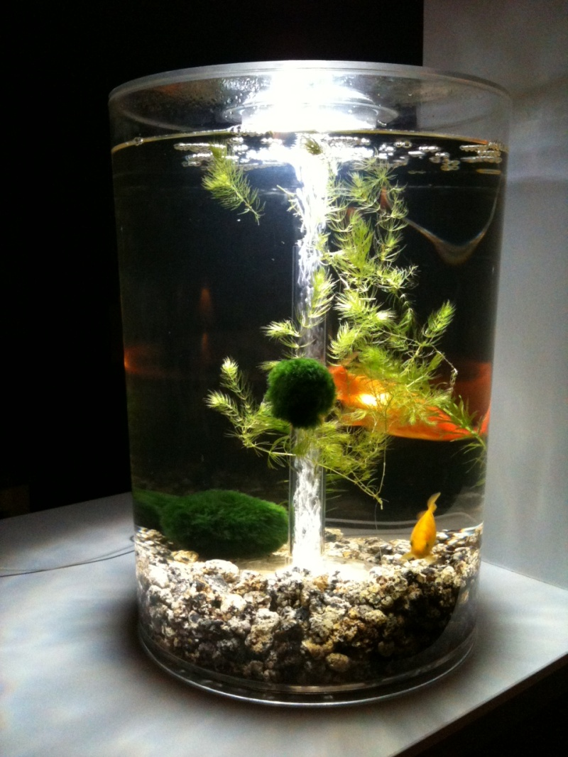 Mis en place aquarium 30l for Bac a poisson pour pied