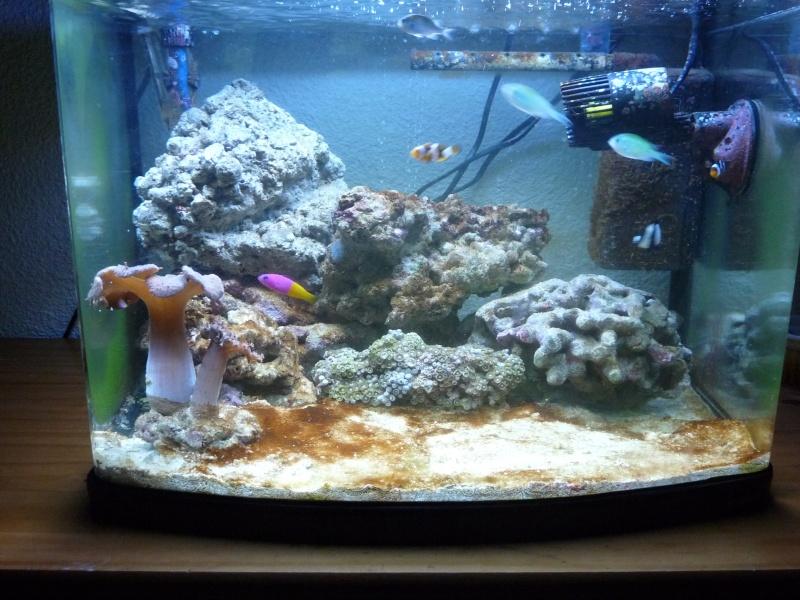 Petite photo de mon nano 60l for Poisson aquarium 60l